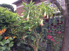 Angolo fiorito:adoro il mio giardino!!!!
