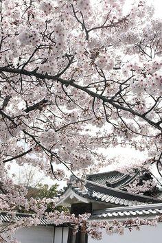 Kajuuji-temple #kyoto #japan