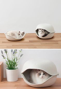 Design eco-friendly per #pet lovers!  Cucce per gatti (e per cani) con un occhio al design e l'altro all'ambiente.  Cat Shell by Oppo http://www.itsmag.it/cucce-per-gatti-e-per-cani-di-design/  #cucce #gatti #design #innovation #ecofriendly #cats