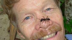 Las picaduras de insectos más dolorosas en el mundo según un científico que las experimentó todas