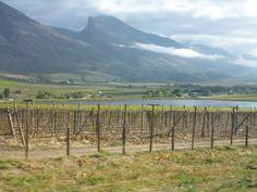 Les vignes ya a sur plusieurs hectares mais vraimt bcp des 2 côtés