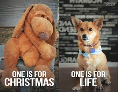 I typically don't like PETA (hypocrites) but this is really true! They actually had a better suggestion.