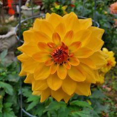 🌼🌱 #monklife #monastery  #gardenlife  #gorgeous Garden, Plants, Life, Garten, Lawn And Garden, Gardens, Plant, Gardening, Outdoor