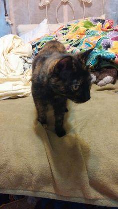 My adorable cat Kimmi