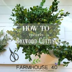How To Preserve Boxwood cuttings to make your own wreaths. Details on the blog