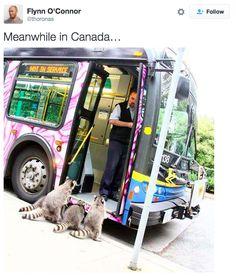 """...reminds me of John Cadiz's """"Wilds of Canada"""" cartoons! :-D"""