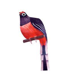 Bird caricature