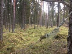Ei hullumpaa metsää kävellä.