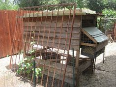chicken coop with vine trellis and green roof