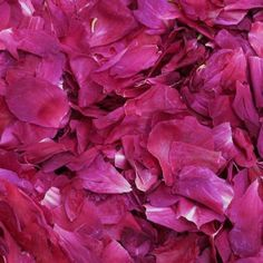 Wholesale Dark Fuschia Fd Peony Petals (30 Cups) - Blooms by the Box