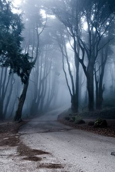 Foggy forest.