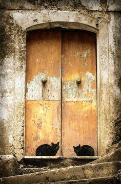 Attention à vous, la porte n'est pas gardée par un Cerbère mais par deux matous…