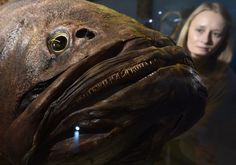 museum fish specimen - Google Search
