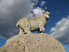 Mt. Goat Statue, Smithers, Canada  #goatvet collects art which feature goats