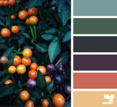 New Nature Inspired Color Palette Design Seeds Ideas Bedroom Colour Palette, Nature Color Palette, Colour Pallette, Colour Schemes, Color Combos, Bedroom Colors, Colors Of Nature, Design Palette, Design Seeds