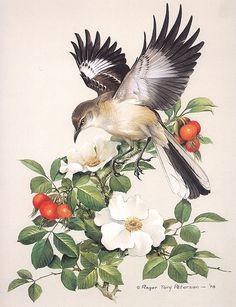 Коллекция картинок: Roger Tory Peterson. Птицы навсегда!