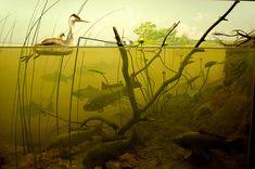 Duck and Fish Underwater Diorama