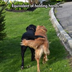 Attack of funny dogs.–12 Pics