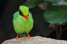 Nice green bird
