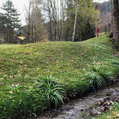 Ist für dich der #Frühling auch die schönste Jahreszeit? 💚 Schau mal, wie alles grün geworden ist .... 🌼 das Wetter der letzten Tage hat unseren Golfplatz richtig gut getan! ⛳️ Wir wünschen ein schönes Oster-Wochenende! 🐇  #visitcarinthia  #Golfplatz #kgc #Dellach #Wörthersee #golf #sport #golfing #golfcourse #golflife #golfer #kgcdellach #Golfclub #happyeaster #froheostern Golf Sport, Golfer, Instagram, Plants, The Last Day, Weather, Seasons Of The Year, Nice Asses, Plant