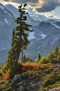 Artist Point near the Mt. Baker ski area in the north Cascades of Washington •…