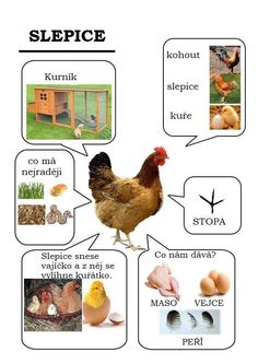 Poule - Animaux de la ferme animals silly animals animal mashups animal printables majestic animals animals and pets funny hilarious animal French Teacher, Teaching French, French Education, Kids Education, How To Speak French, Learn French, French Classroom, French Resources, Montessori Activities
