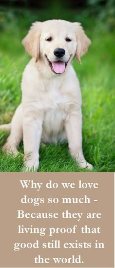 Why do we love dogs