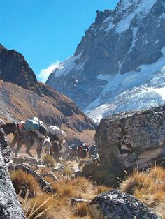 Salkantay trek is considered as one of the 25 best Treks in the World, by National Geographic.