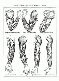 A.Loomis ✤ || CHARACTER DESIGN REFERENCES | キャラクターデザイン • Find more at https://www.facebook.com/CharacterDesignReferences if you're looking for: #lineart #art #character #design #animation #draw #reference #anatomy #artist #pose #gestures #how #to #tutorial #comics #conceptart #modelsheet #elbow #supraspinatus #deltoids #triceps #biceps #shoulders #shoulder #forearms #forearm #wrists #wrists #arm #arms #radius #humerus #ulna || ✤