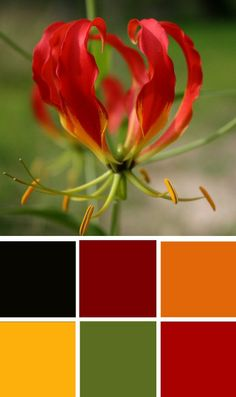 Vibrant colour combinations