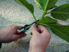 Regrow Hydrangeas From Cutting-Hydrangea Propagation Tips Smooth Hydrangea, Hydrangea Shrub, Hydrangea Colors, Hydrangea Care, Hydrangea Not Blooming, Veg Garden, Garden Care, Container Gardening, Gardening Tips