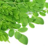 Food For Thought | Dr Plant explains what sets Zija's Moringa apart from the rest.
