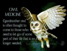 This includes a poem about someone that is a night owl. Also, it contains owl facts and pictures. Spirit Animal Totem, Animal Spirit Guides, Animal Totems, Animal Meanings, Animal Symbolism, Color Meanings, Owl Facts, Native American Wisdom, American Indians