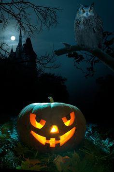 $28.90 (Buy here: https://alitems.com/g/1e8d114494ebda23ff8b16525dc3e8/?i=5&ulp=https%3A%2F%2Fwww.aliexpress.com%2Fitem%2F200cm-150cm-6-5-5ft-photography-backdrop-pumpkin-castle-owl-Halloween-background-vinyl-backdrops-for-photography%2F2025250405.html ) Kate 5*7ft photography backdrop pumpkin castle owl vinilo buhos Backdrops Halloween background  vinyl backdrops for photography for just $28.90
