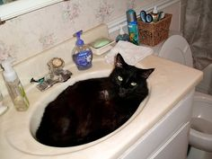 Plume dozing in the sink.  He had a huge tail, hence the name.