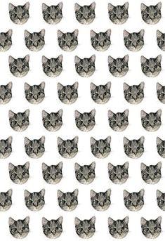 Cat pattern!