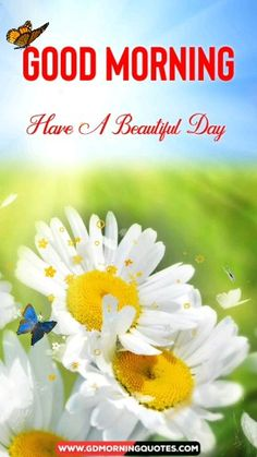 Good Morning Quotes Discover Good Morning Video Flower Flower Video Good Morning Beautiful Video So are you searching for Good Morning Quotes to send to your loved ones in the morning than you are at the right place which shows the Good Morning Video Songs, Flirty Good Morning Quotes, Positive Good Morning Quotes, Morning Quotes For Friends, Good Morning Inspirational Quotes, Morning Greetings Quotes, Good Morning Gif, Good Morning Flowers, Good Morning Messages