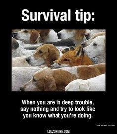 Important Survival Tip#funny #lol #lolzonline