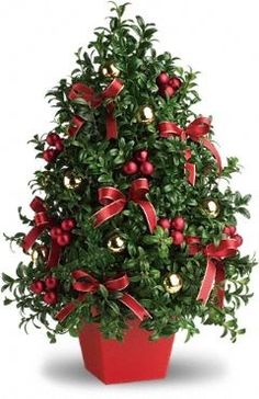 Deck the halls - and tables, and mantles, and foyers - with this charming tabletop Christmas tree! Elegant English boxwood stems are hand arranged to look like a mini Christmas tree, complete with all the festive trimmings! Christmas Flower Arrangements, Christmas Flowers, Christmas Centerpieces, Christmas Tree Decorations, Christmas Wreaths, Christmas Crafts, Floral Arrangements, Tabletop Christmas Tree, Mini Christmas Tree