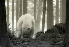 climate change by christopher turzak on 500px