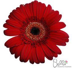 Fresh Gerbera Daisies Wedding Flowers