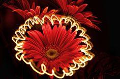 LightFlower! by Reto Savoca  #light_art