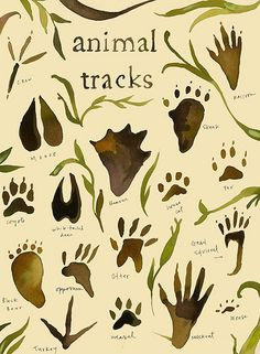 Would be great to make a watercolor poster like this animal tracks photo. Camping Bedroom, Kids Bedroom, Boys Camping Room, Bedroom Themes, Bedroom Decor, Bedroom Ideas, Nursery Ideas, Deco Nature, Animal Tracks