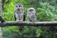 Biodiversität: Tag des Artenschutzes