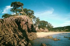 Great Barrier Island, New Zealand