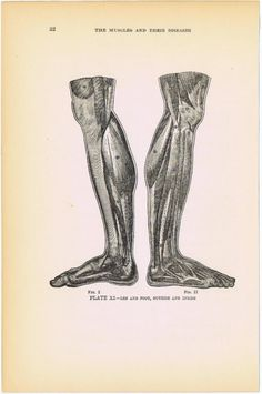 1919 HUMAN ANATOMY PrINT  Plate XI  'Leg and by BlastsFromThePast, $9.95