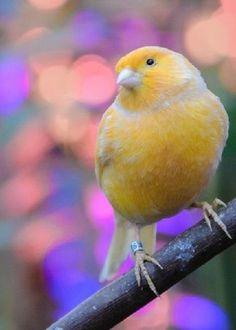 I wish I was tiny so I could hug birds