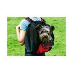 Mochila para transportar cães pequenos duplo uso