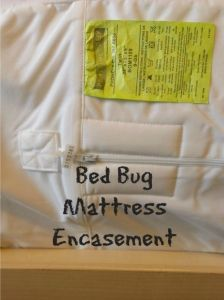 how to tell the difference between bed bugs and carpet beetles