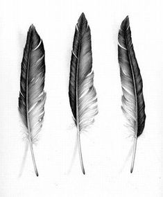 Didn't think of having the feathers fade black to white. That'd be gorgeous